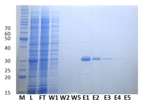Image result for protein purification